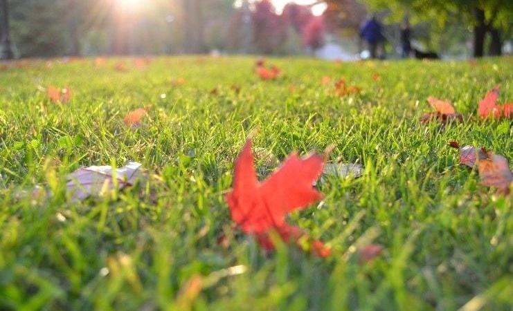 The-Different-Types-Of-Turf-and-Their-Benefits-1