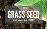 best-grass-seed-reviews-2017