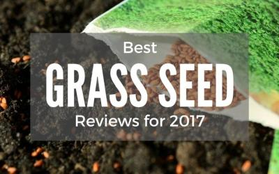 best-grass-seed-reviews-2017