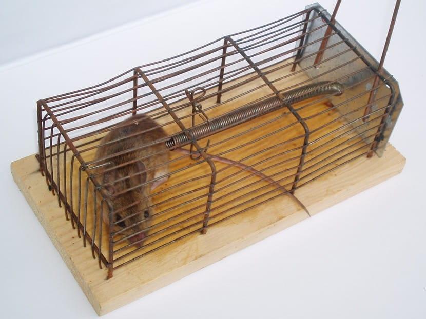 Best-Mouse-Trap-Reviews-2