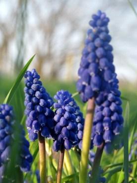 blue prettiness