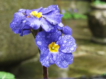 wet & pretty