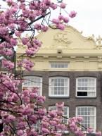 Amsterdam cherry blossoms