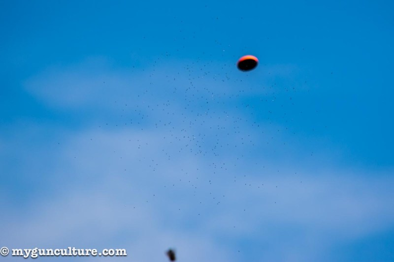 A cloud of 7 ½ size shot pellets a split second before impact. Note the wad at the bottom of the frame.