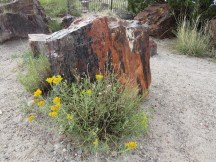 10. Petrified Forest/Painted Desert National Park