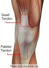Fungsi Tulang Tempurung Lutut : fungsi, tulang, tempurung, lutut, Penyakit, Osgood, Schlatter, PORTAL, MyHEALTH