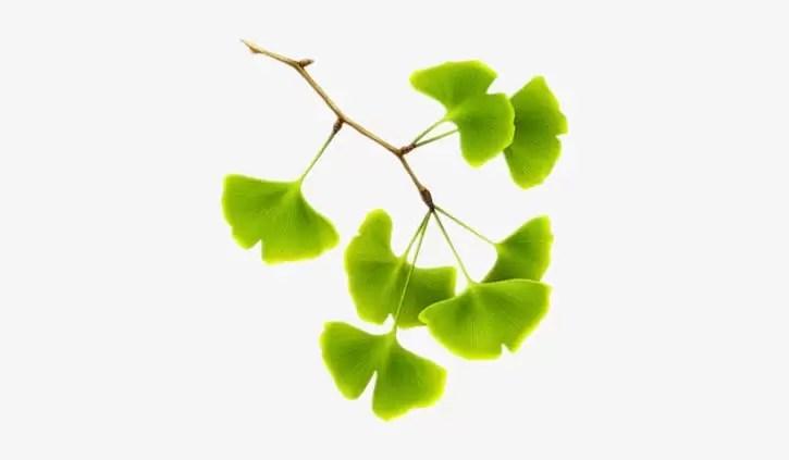 Best herbs for men erectile dysfunction