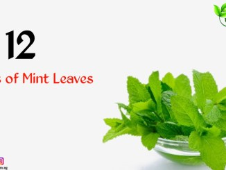 uses of mint leaves