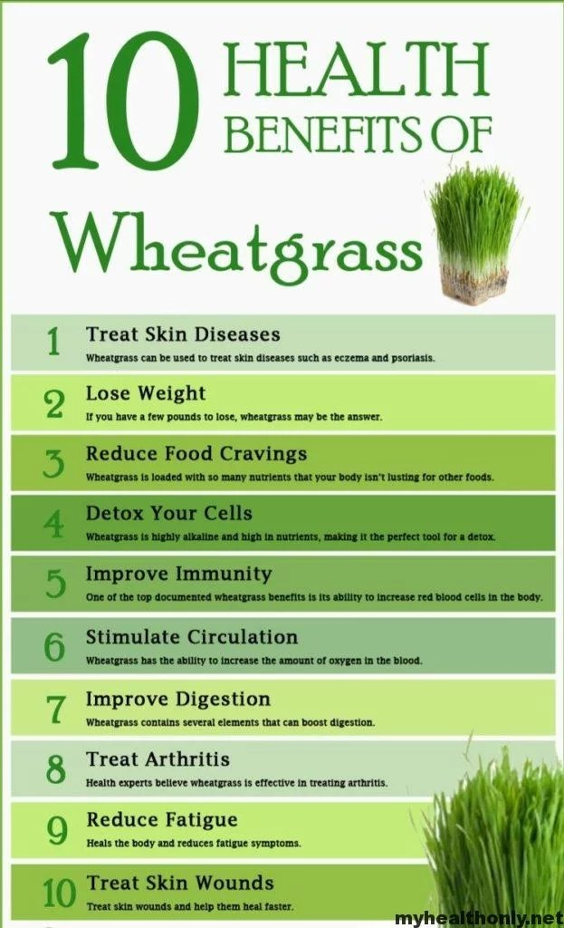 13 Marvelous Benefits of Wheatgrass You must to know - My ...