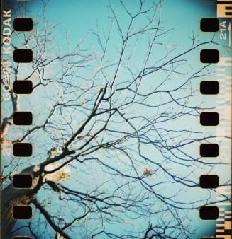 blackbird fly1