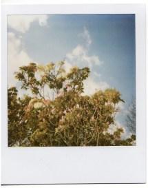 flowers_polaroid3