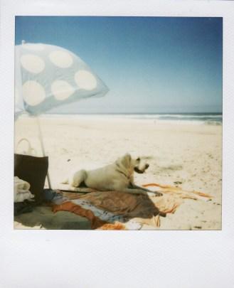 Summer09-1