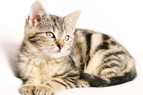 jenis warna kucing