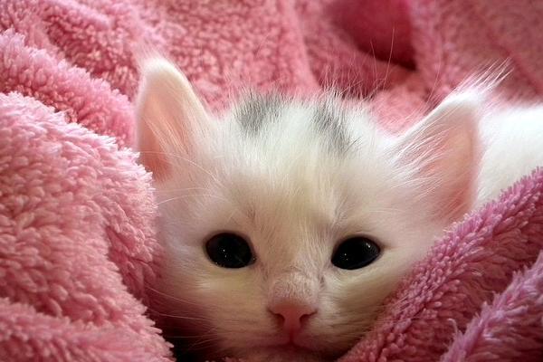 kucing warna bayangan