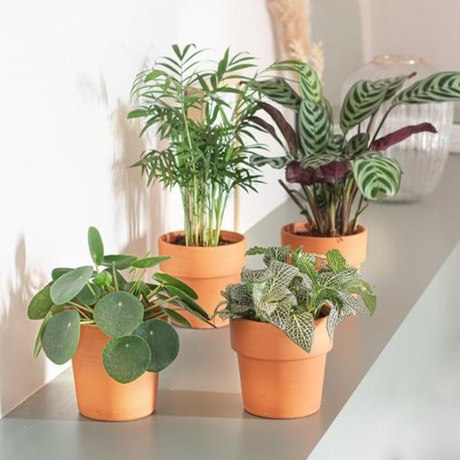 plantes faciles d'entretien