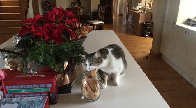 Leopold discovers nutmeg and cinnamon biscotti