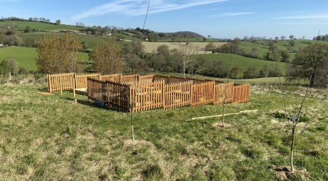 Building our first ever veg patch – part two