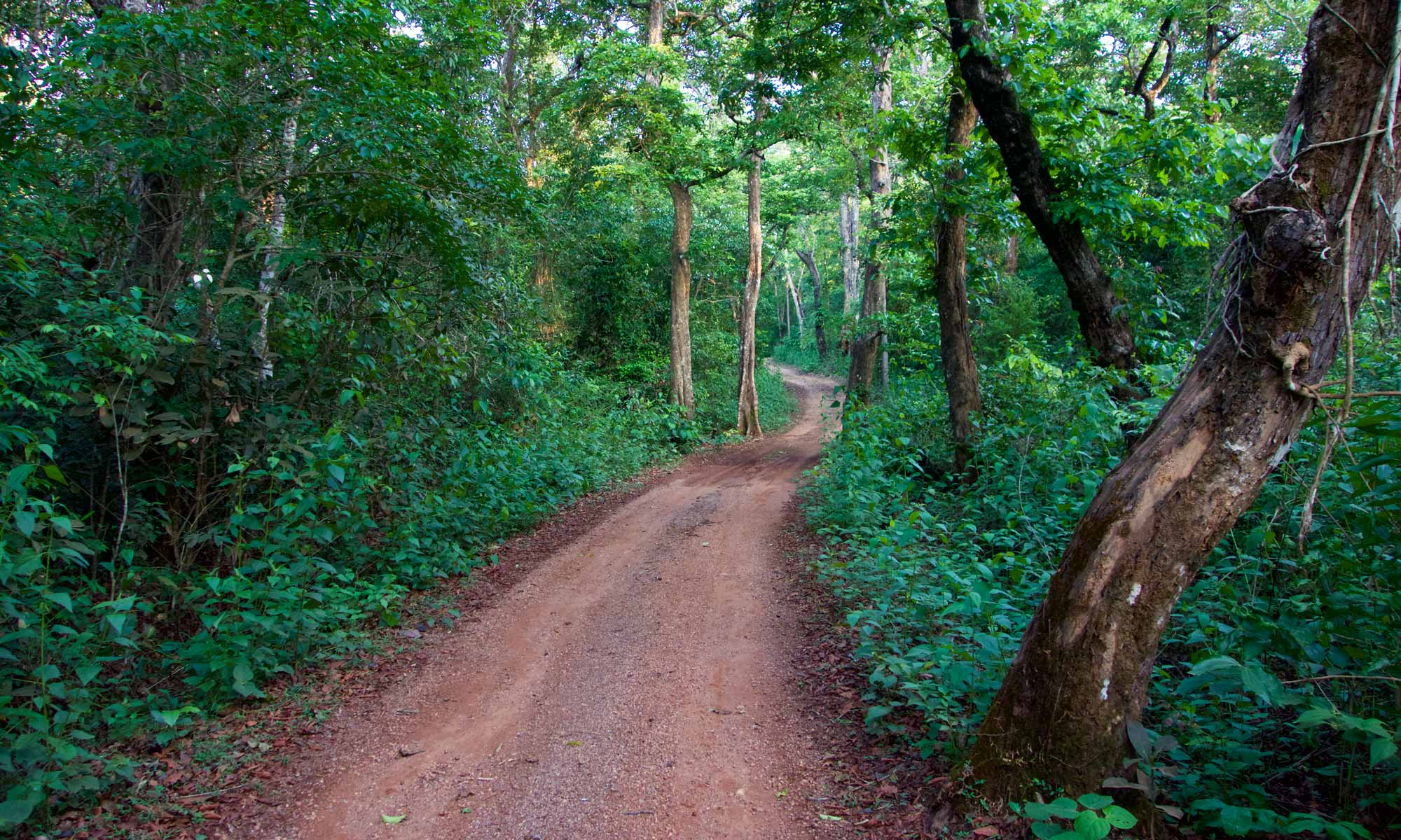A Dusty Road Near the Home of Chiti