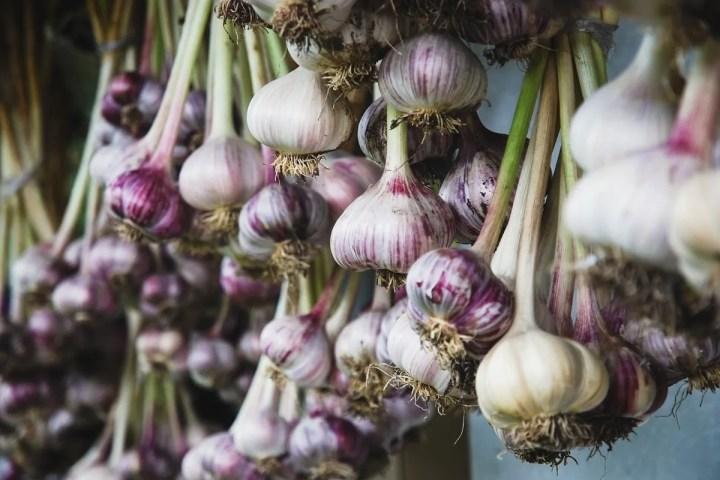 drying-garlic-from-growing-garlic-cloves