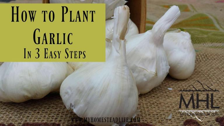 How to Plant Garlic in 3 Easy Steps.