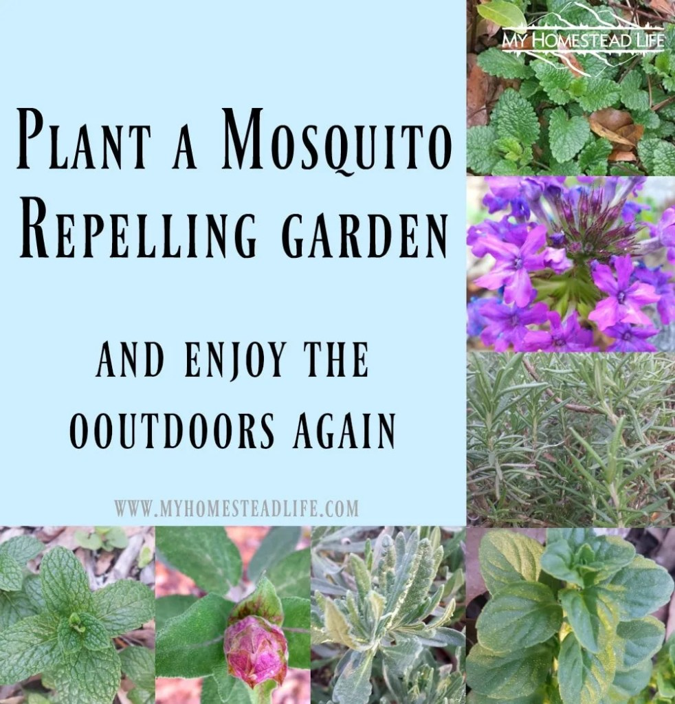 Plant a Mosquito Repelling Garden & enjoy the outdoors again!