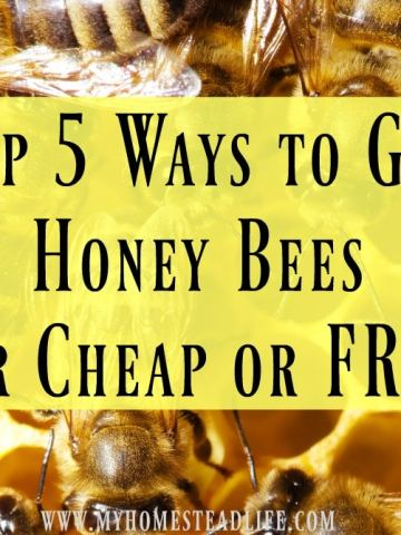 Top 5 Ways to Get Honey Bees for Cheap or Free