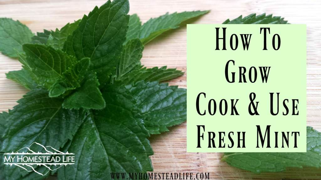 How To Grow, Cook & Use Fresh Mint