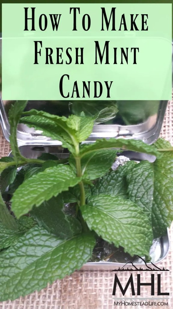 How To Make Fresh Mint Candy with just 3 ingredients!