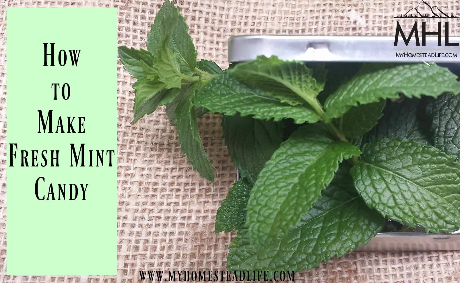 How To Make Fresh Mint Candy- Just 3 Ingredients!