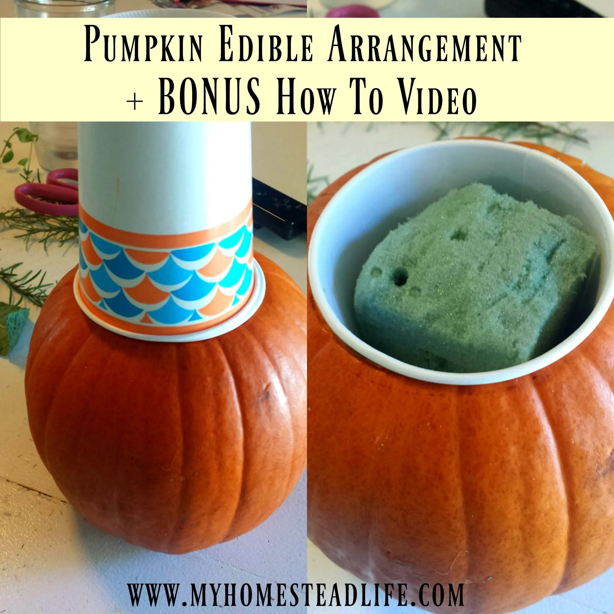 Pumpkin Edible Arrangement + BONUS Video
