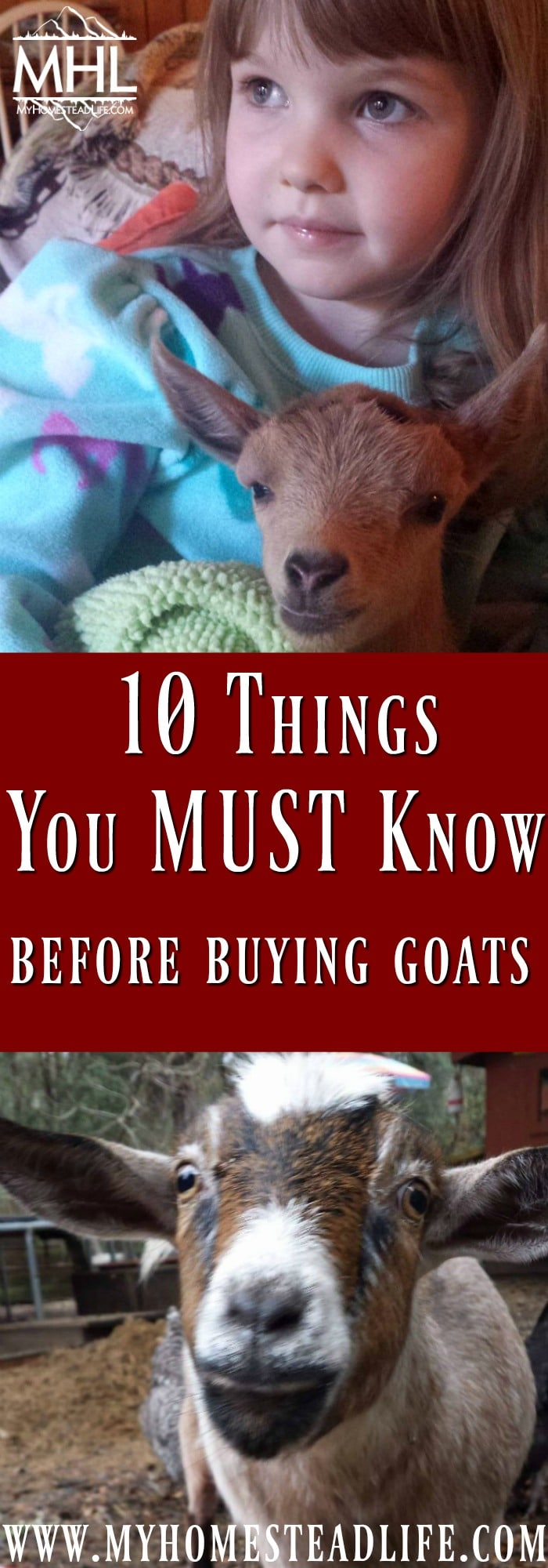 10 Things You MUST Know Before Buying Goats