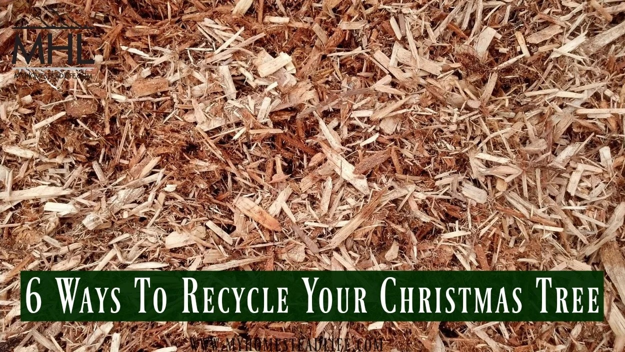 6 Way To Recycle Your Christmas Tree