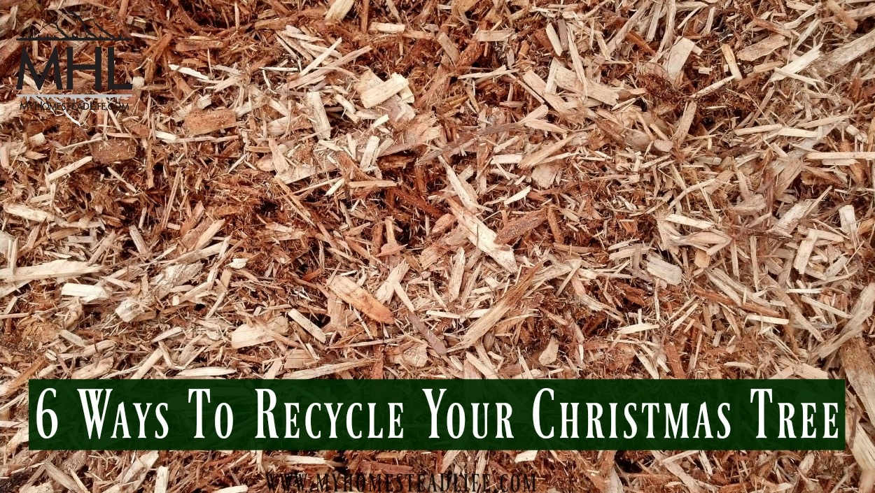 6 Ways To Recycle Your Christmas Tree - My Homestead Life