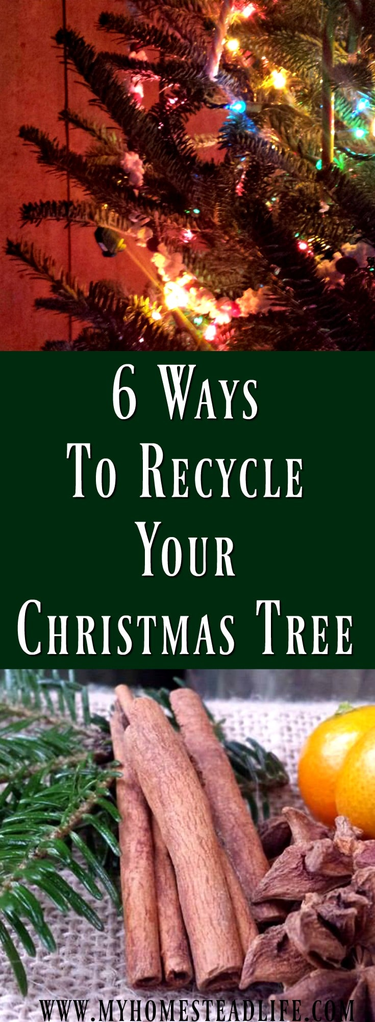 6 Ways To Recycle Your Christmas Tree