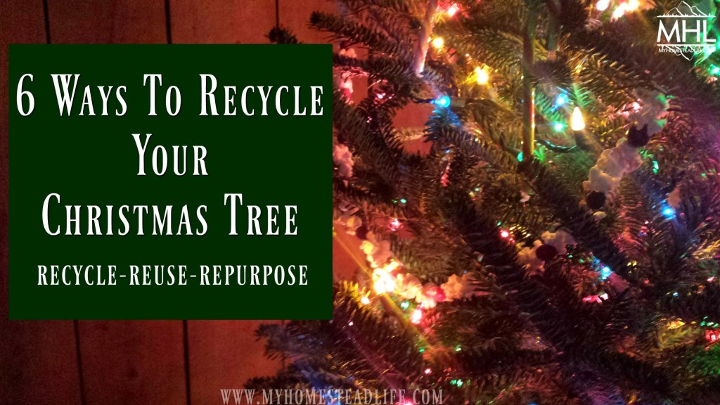6 Ways To Recycle Your Christmas Tree- Reuse Recycle Repurpose