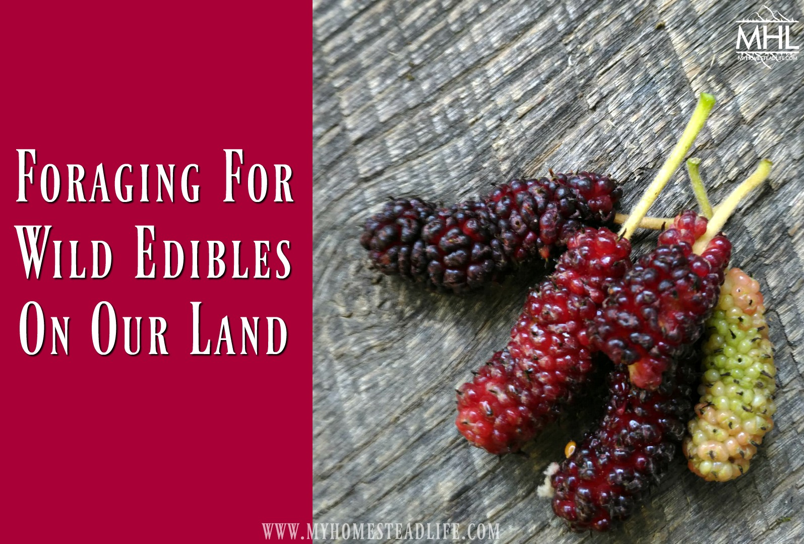 Foraging For Wild Edibles On Our Land