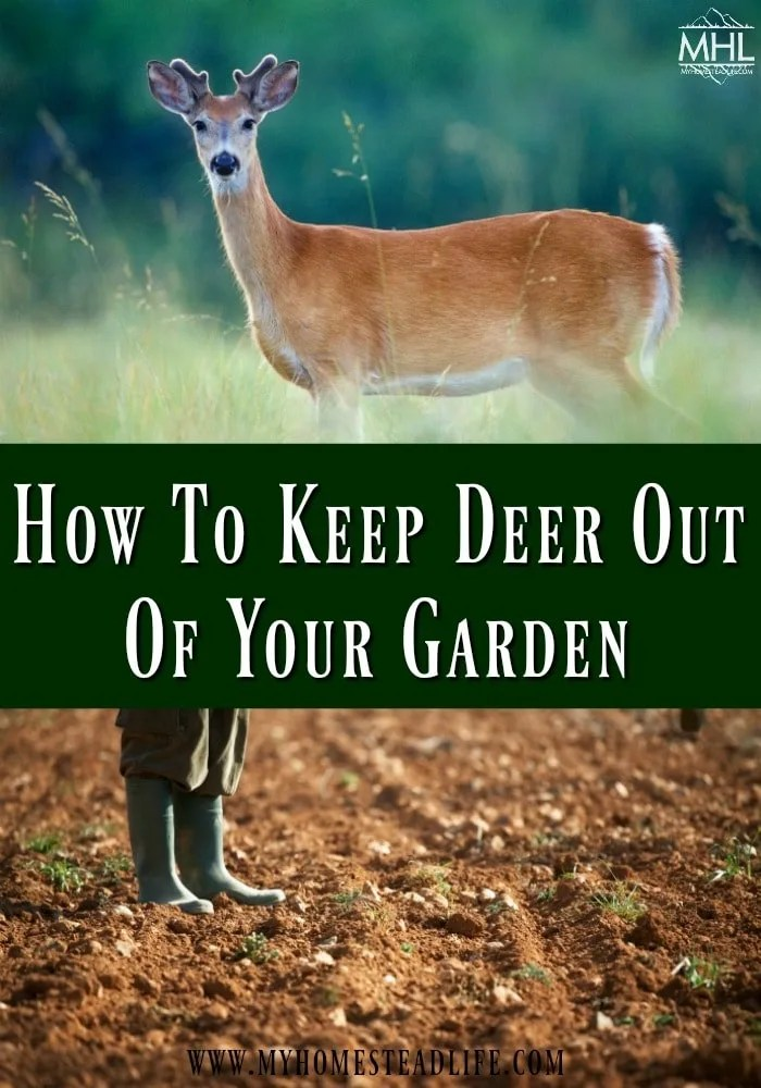 deer-garden-how-to-keep-deer-out-garden pest-