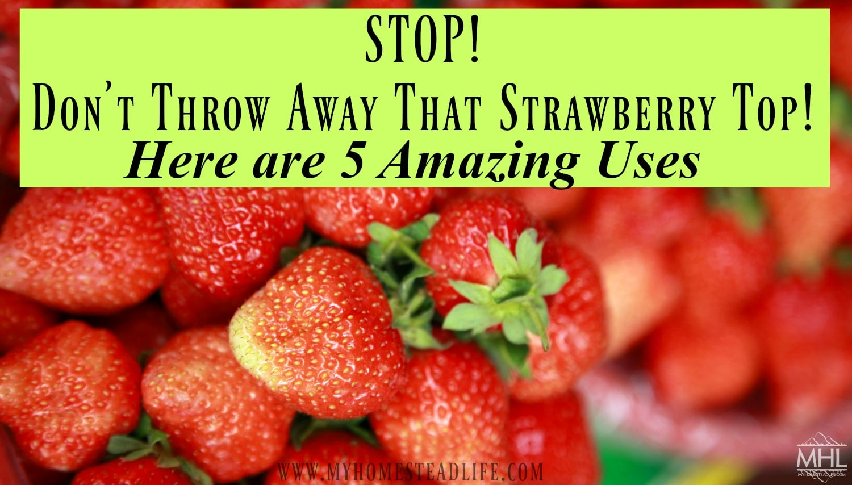 TOP 5 strawberry vitamin soups
