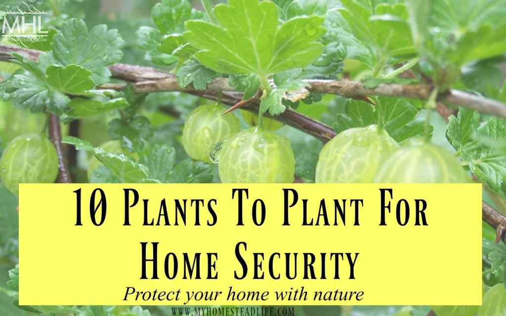 home-security-home-defense-spiky-plants