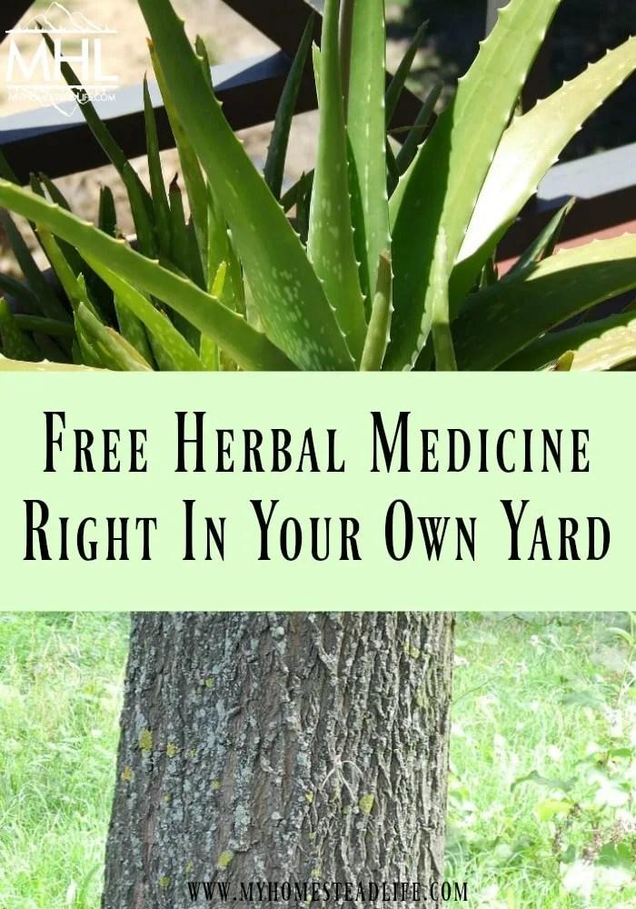 herbal-medicine-alternative