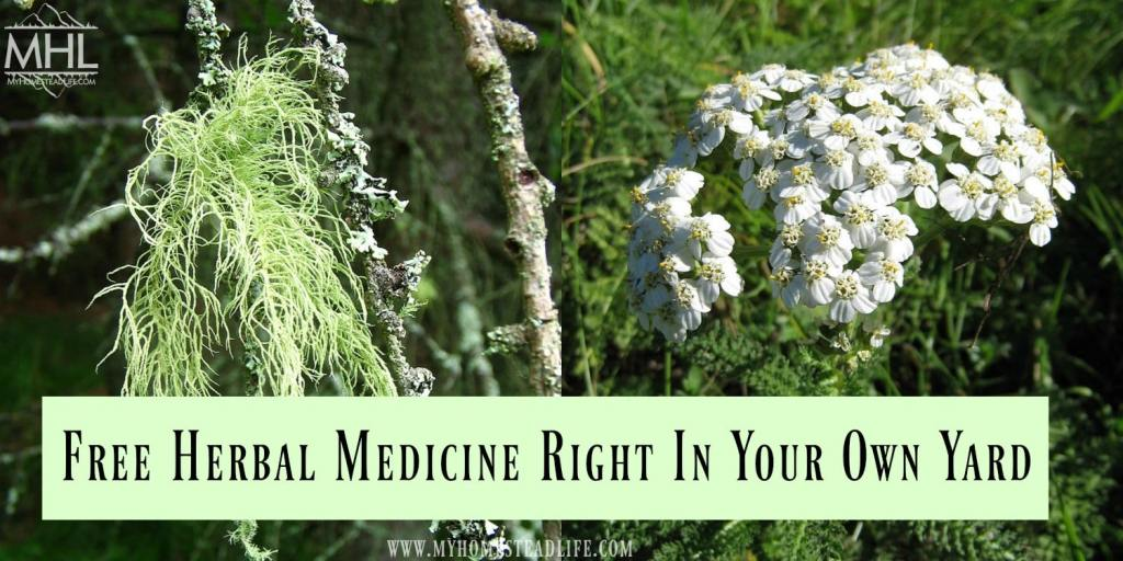 herbal-medicine-alternative-treatment-herbs