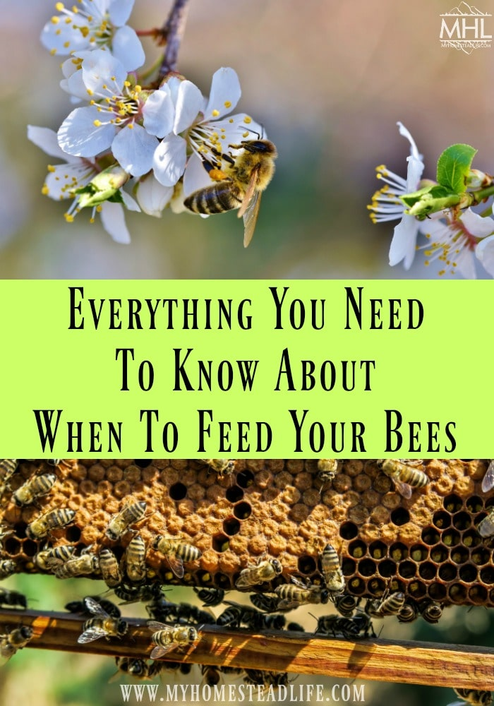 when to feed your bees- beekeeping-nectar flow- honeybees