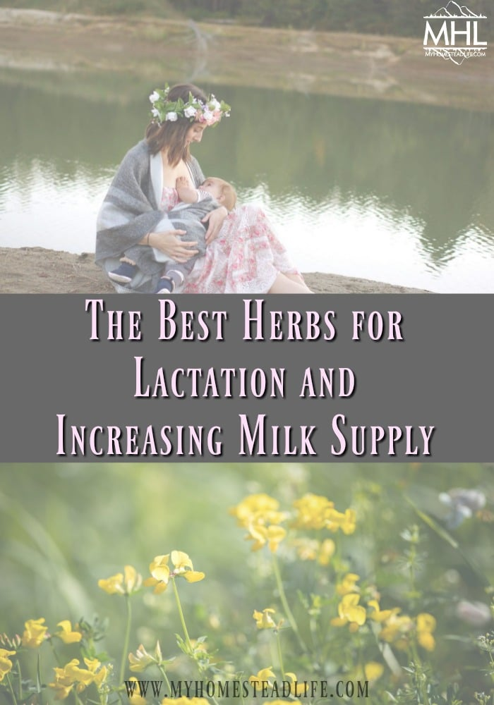 herbs-for-lactation-increased-milk-supply-breastfeeding
