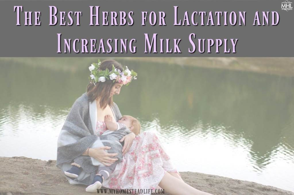 herbs-for-lactation-increased-milk-supply