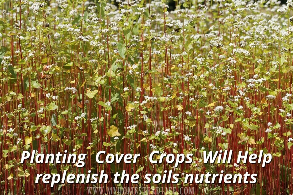 planting-cover-crops-soil-nutrients