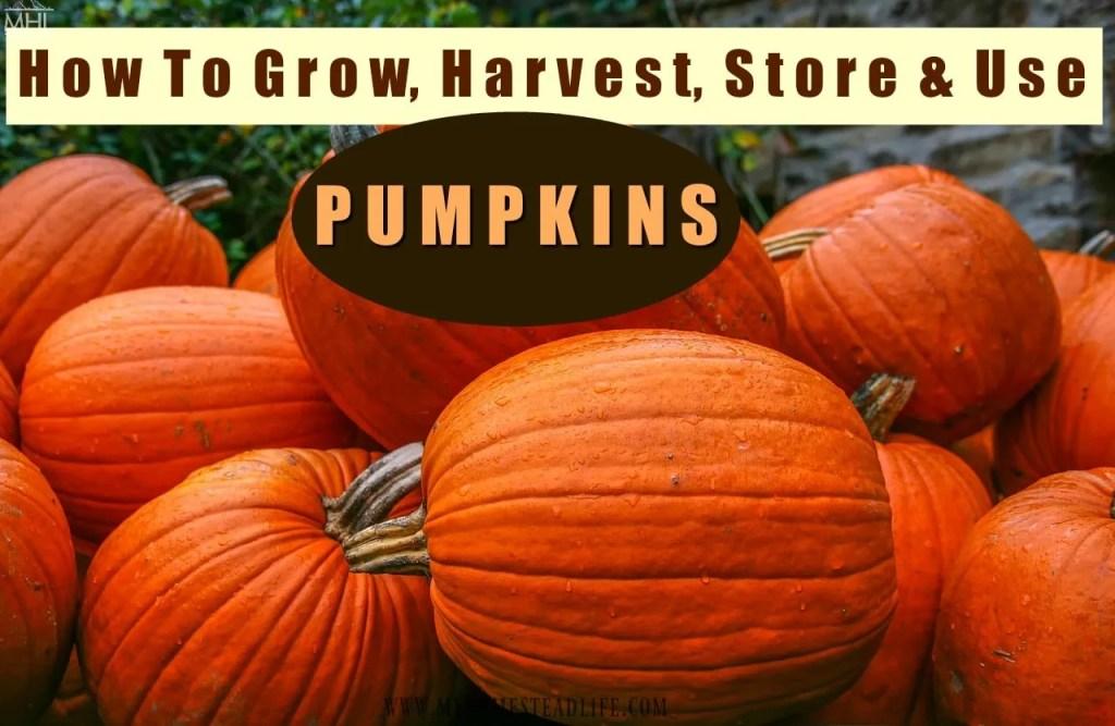 grow-pumpkins-harvest-fall