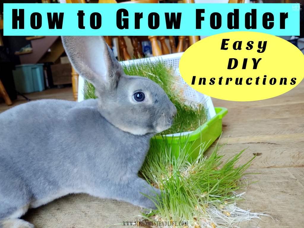 rabbit-eating-fodder