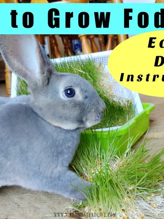 Growing Fodder For Livestock- Easy DIY Instructions