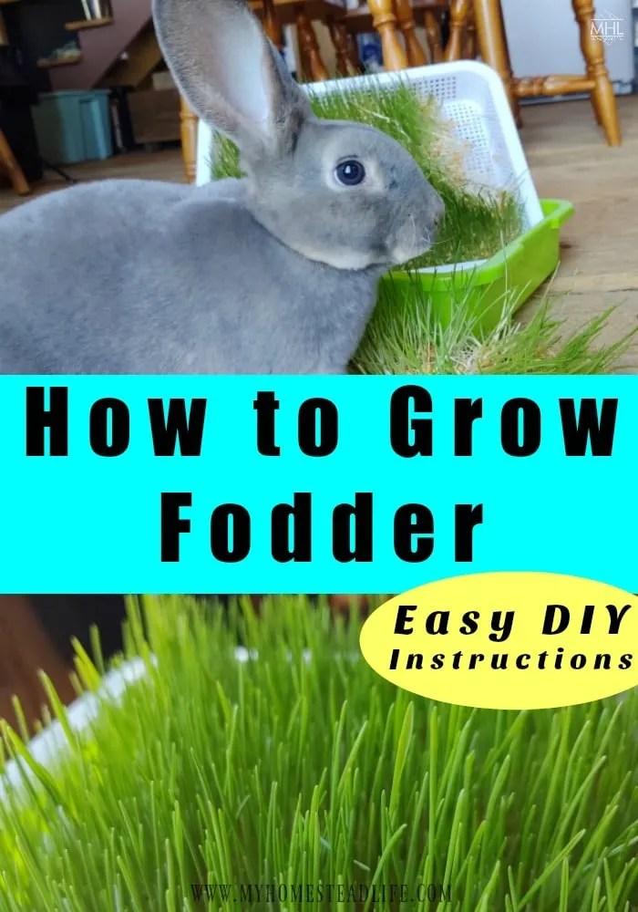 bunny-eating-fodder