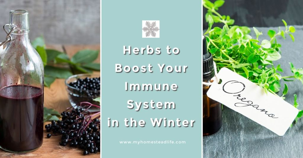 herbs-to-boost-immune-system